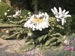 Ландшафтные хитрости, 104 серия. Камень, плитка и цветы в саду Ирины Хоменко